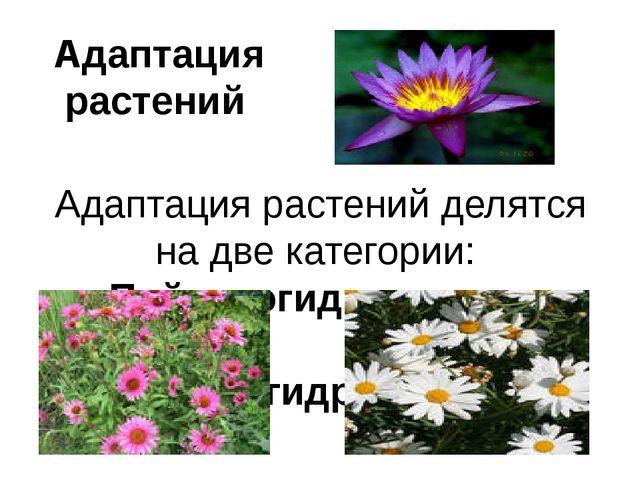 Адаптация растений Адаптация растений делятся на две категории: Пойкилогидрич...
