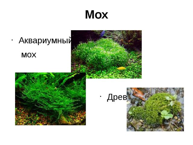 Мох Аквариумный мох Древесный мох