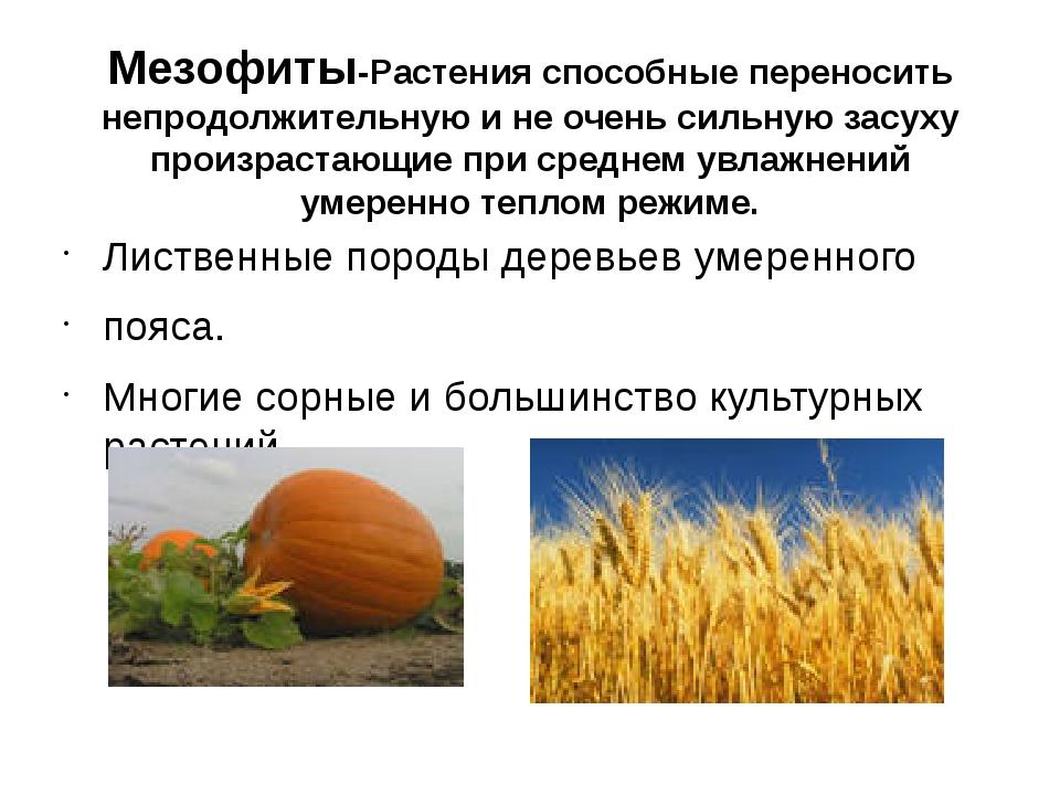 Мезофиты-Растения способные переносить непродолжительную и не очень сильную з...