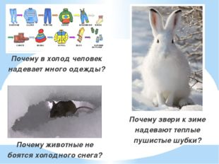 Почему в холод человек надевает много одежды? Почему в холод человек надевае