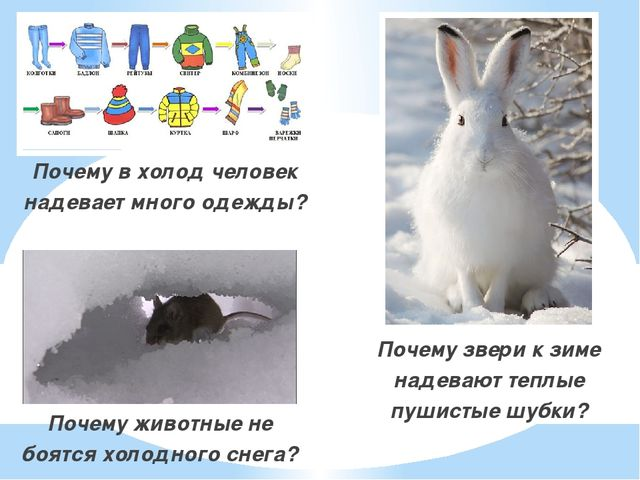 Почему в холод человек надевает много одежды? Почему в холод человек надевае...