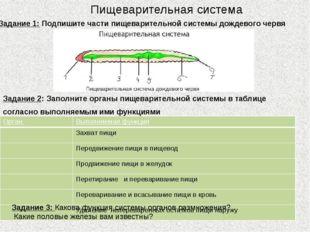 Пищеварительная система Задание 1: Подпишите части пищеварительной системы до