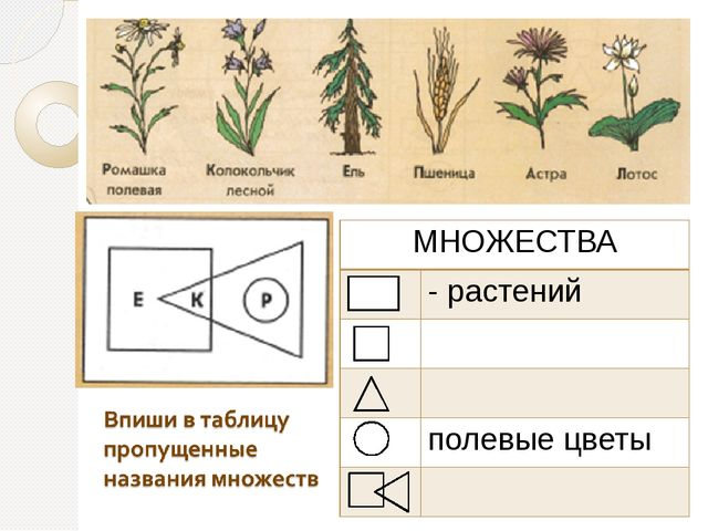 МНОЖЕСТВА - растений полевые цветы