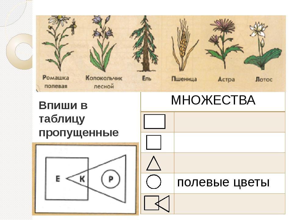 Впиши в таблицу пропущенные названия множеств МНОЖЕСТВА полевые цветы