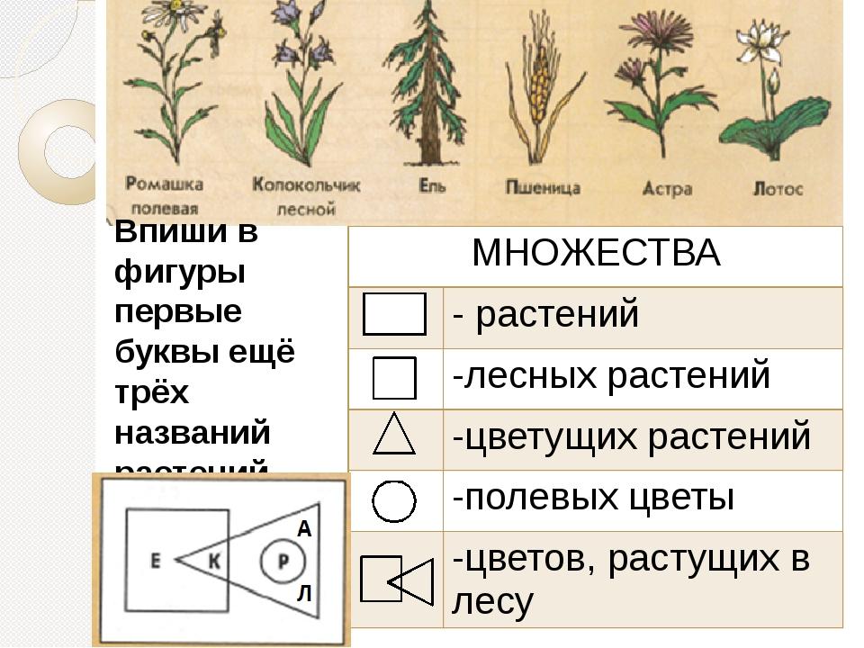 Впиши в фигуры первые буквы ещё трёх названий растений МНОЖЕСТВА - растений...