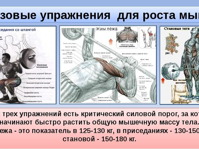 Базовые упражнения для роста мышц У всех трех упражнений есть критический сил...