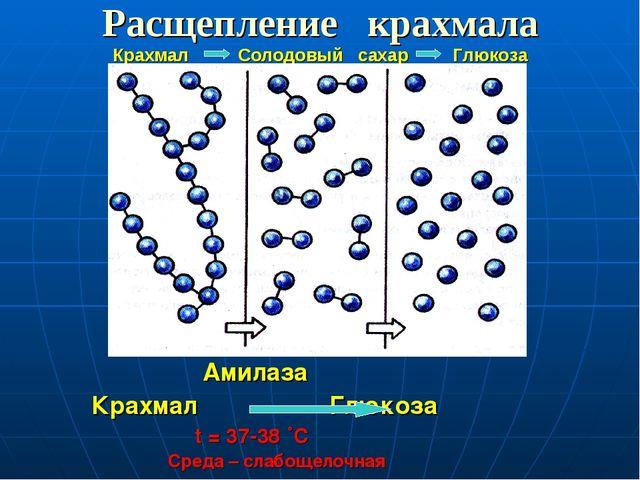 Расщепление крахмала Крахмал Солодовый сахар Глюкоза Амилаза Крахмал Глюкоза...
