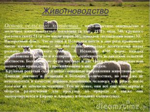 Животноводство Основа сельского хозяйства - мясо-шёрстное овцеводство и моло