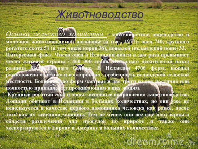 Животноводство Основа сельского хозяйства - мясо-шёрстное овцеводство и моло...