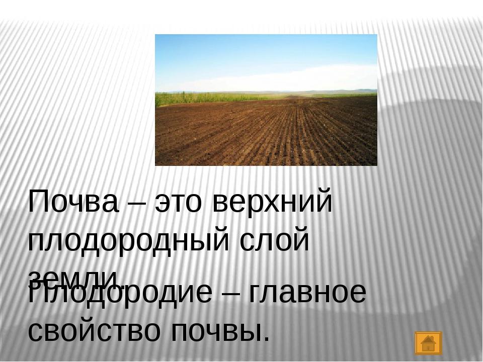 Почва – это верхний плодородный слой земли. Плодородие – главное свойство поч...