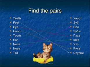 Find the pairs Teeth Feet Eye Hand Tooth Ear Neck Nose Tail Хвост Зуб Нос Зуб
