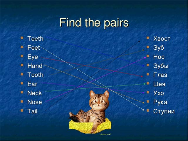 Find the pairs Teeth Feet Eye Hand Tooth Ear Neck Nose Tail Хвост Зуб Нос Зуб...
