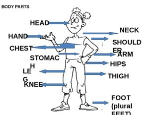 HEAD NECK SHOULDER HAND CHEST STOMACH ARM HIPS LEG KNEE THIGH FOOT (plural F
