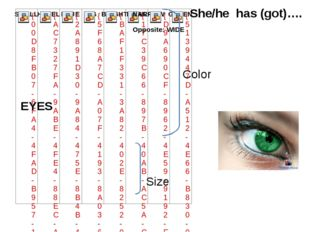 EYES She/he has (got)…. Color Size