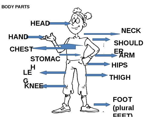 HEAD NECK SHOULDER HAND CHEST STOMACH ARM HIPS LEG KNEE THIGH FOOT (plural F...