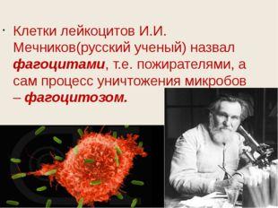 Клетки лейкоцитов И.И. Мечников(русский ученый) назвал фагоцитами, т.е. пожи