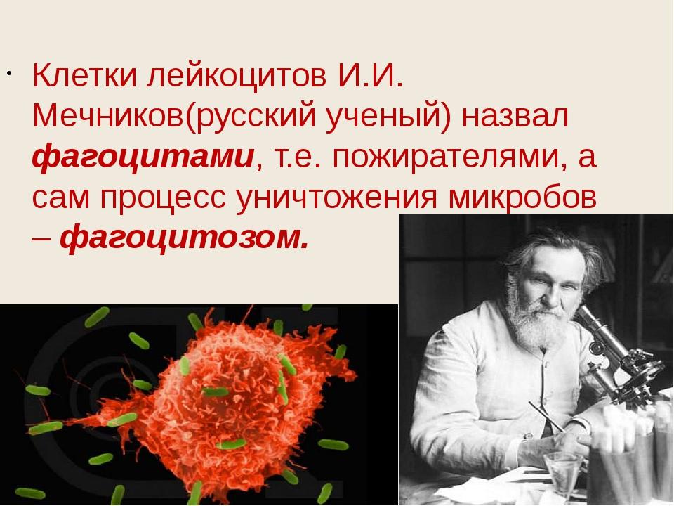 Клетки лейкоцитов И.И. Мечников(русский ученый) назвал фагоцитами, т.е. пожи...