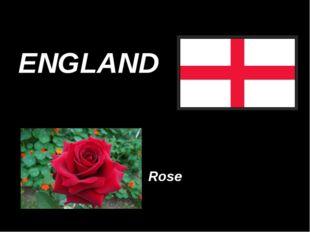 ENGLAND Rose