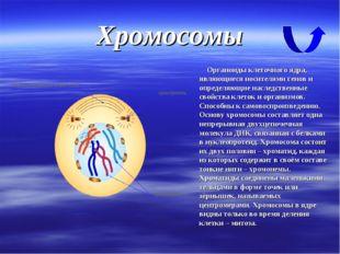 Хромосомы Органоиды клеточного ядра, являющиеся носителями генов и определяющ