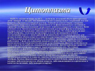 Цитоплазма На 85 % состоит из воды, на 10 % — из белков, остальной объем прих