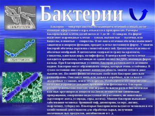 Бактерии — микроорганизмы, обладающие клеточной стенкой, но не имеющие оформ