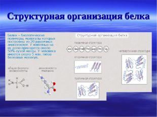 Структурная организация белка
