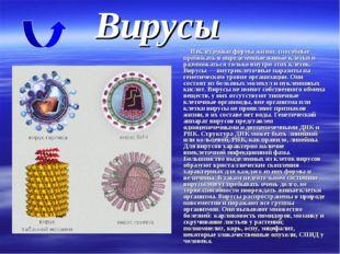 Неклеточные формы жизни, способные проникать в определенные живые клетки и р