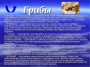 Грибы МУКОР — плесневый гриб, головчатая плесень, появляющаяся на пищевых про