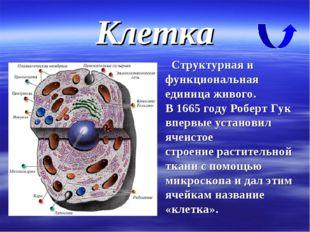 Клетка Структурная и функциональная единица живого. В 1665 году Роберт Гук вп