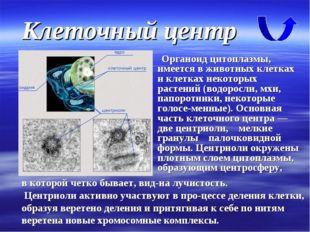 Клеточный центр Органоид цитоплазмы, имеется в животных клетках и клетках нек