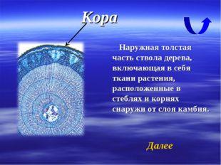 Кора Наружная толстая часть ствола дерева, включающая в себя ткани растения,