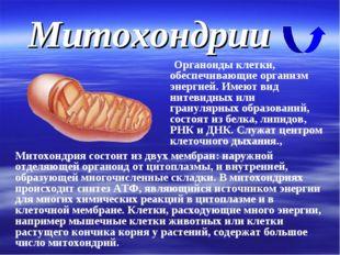 Митохондрии Органоиды клетки, обеспечивающие организм энергией. Имеют вид нит