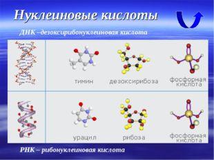 Нуклеиновые кислоты ДНК –дезоксирибонуклеиновая кислота РНК – рибонуклеиновая