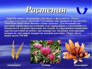Растения Царство живых организмов, способных к фотосинтезу. Имеют плотные кле