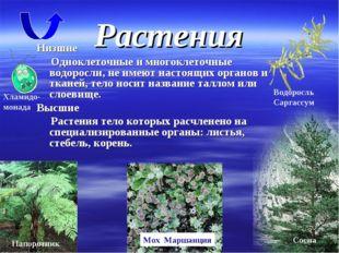 Растения Низшие Одноклеточные и многоклеточные водоросли, не имеют настоящих
