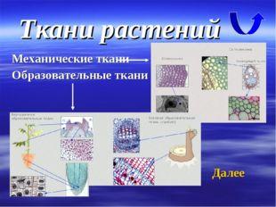 Ткани растений Механические ткани Образовательные ткани Далее
