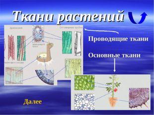 Ткани растений Проводящие ткани Основные ткани Далее