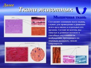 Ткани животных Мышечная ткань Составляет основную массу мышц, служит для прив