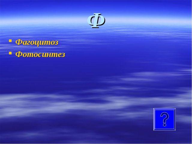 Ф Фагоцитоз Фотосинтез