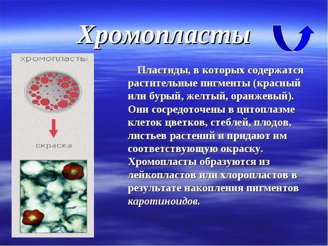 Хромопласты Пластиды, в которых содержатся растительные пигменты (красный или...