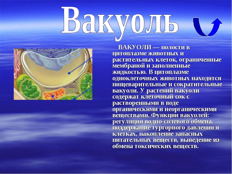 ВАКУОЛИ — полости в цитоплазме животных и растительных клеток, ограниченные...