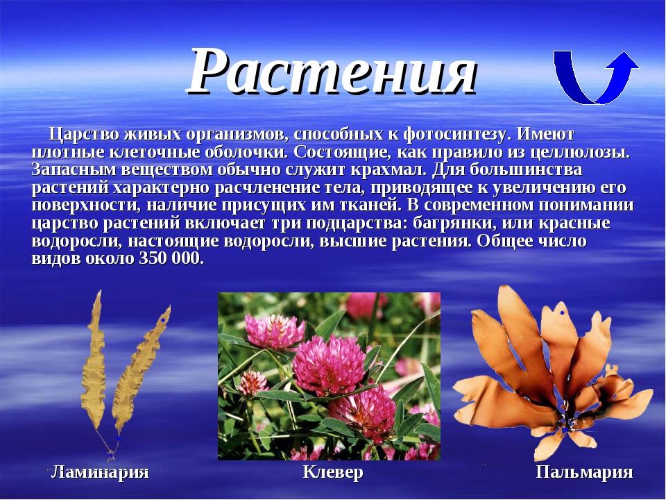Растения Царство живых организмов, способных к фотосинтезу. Имеют плотные кле...