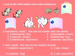 Look at the information and write sentences. [ Cats/rabbits: small ] The cat