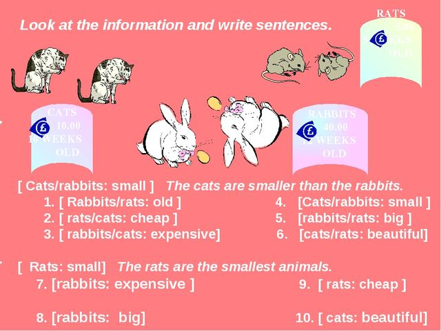 Look at the information and write sentences. [ Cats/rabbits: small ] The cat...