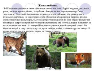 Животный мир. В Швеции встречаются такие обитатели лесов, как лось, бурый мед