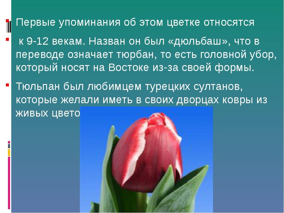 Первые упоминания об этом цветке относятся к 9-12 векам. Назван он был «дюльб...