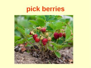 pick berries