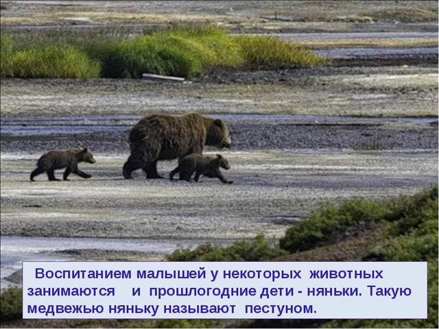 Воспитанием малышей у некоторых животных занимаются и прошлогодние дети - ня...