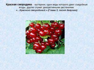 Красная смородина - кустарник, одни виды которого дают съедобные ягоды, други