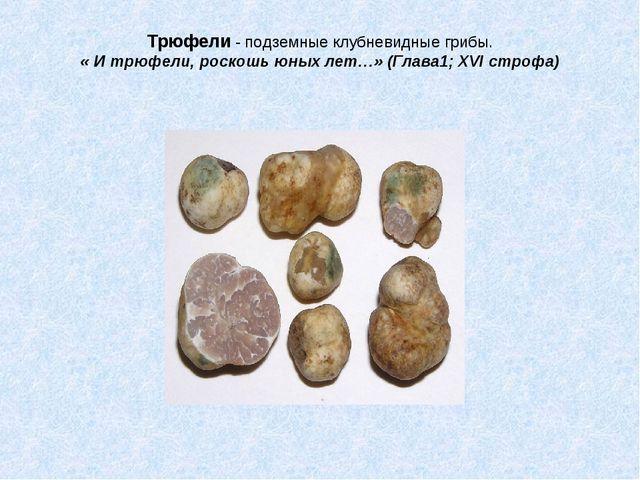 Трюфели - подземные клубневидные грибы. « И трюфели, роскошь юных лет…» (Глав...